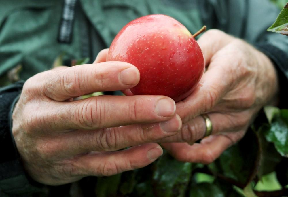 Honeycrisp apples - Arboretum
