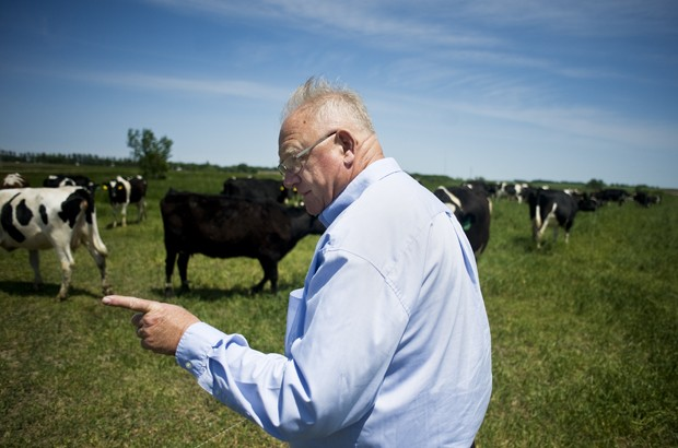 Animal scientist Dennis Johnson inspects a field of organic transitioning dairy cows at the West Central Research and Outreach Center in Morris, Minn. Dennis is leading the program to transition dairy cows to organic at the center.