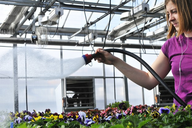 First year graduate student Laura Schwarz waters plants on the St. Paul Campus for class.