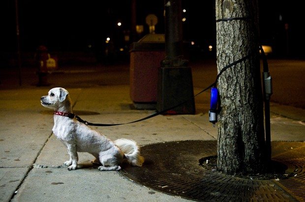 Benji the dog waits for his owner outside the House of Hanson.