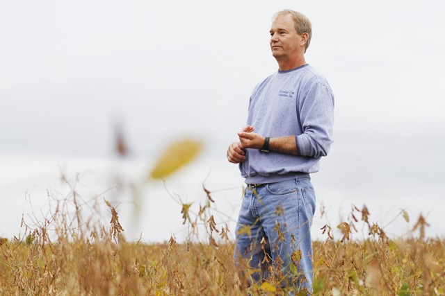Farmer and Crop Consultant Bryce Nelson looks over a field of soybeans that have been infected by sudden death syndrome Thursday in Rose Creek, Minnesota.