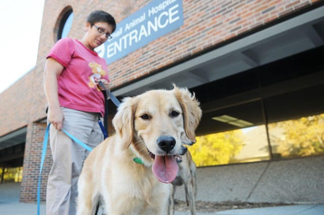 Vet hospital technician Rachel Czachor takes staff dog Jada on her daily walk Wednesday on the St. Paul Campus.  Recently, more veterinary students have gone into practice to treat companion animals instead of treating food animals, which include cattle, swine and poultry.