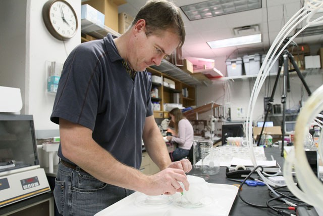 Professor Stephen Kells opens a jar of bed bugs that he is doing research on in his lab Tuesday afternoon in Hodson Hall.