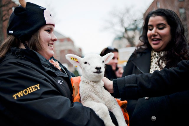 Agriculture Awareness Day sophomore co-chair Theresa Twohey introduces senior Aneesha Sethi to a 10-day old lamb Tuesday on Church St.