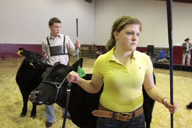 Freshman Kelsey Petit displays her heifer Saturday during the Amateur Beef Show portion of the Minnesota Royal in St. Paul.