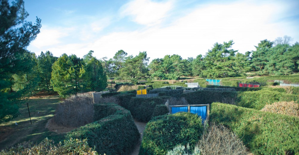The Maze Garden is one of the newest gardens at the Arboretum. It contains 1600 shrub specimens, contains 11 genera and 14 species and cultivars and is nestled into the pine collection across from the lindens.