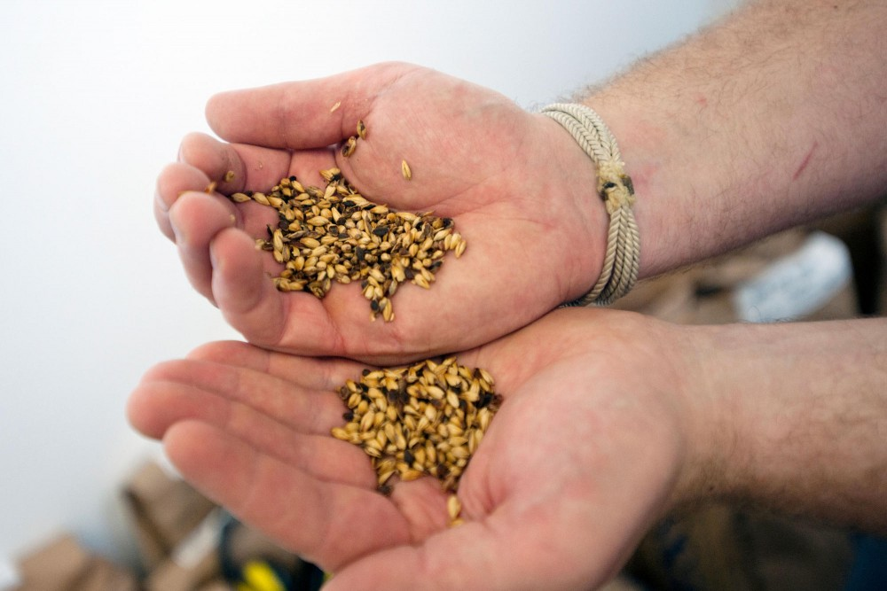 Caramel Malt is one of the ingredients for brewing the India Pale Ale know as Sweet Child of Vine.