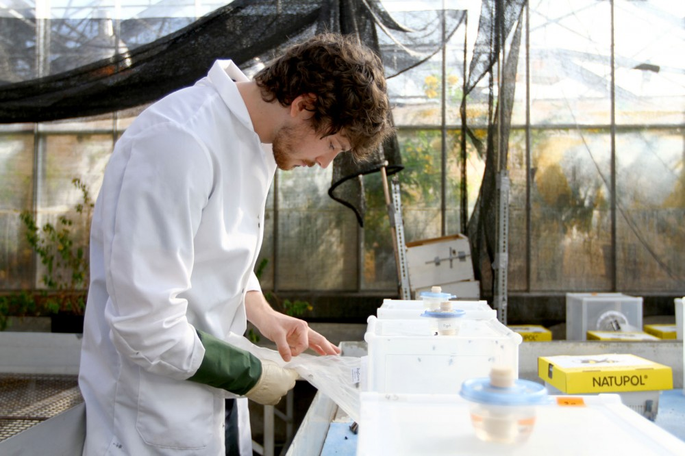Jamison Scholer, a master's student in entomology, feeds colonies of bumble bees varying levels of neonicotinoids, a class of pesticides, Friday at the University Bee Lab greenhouse.