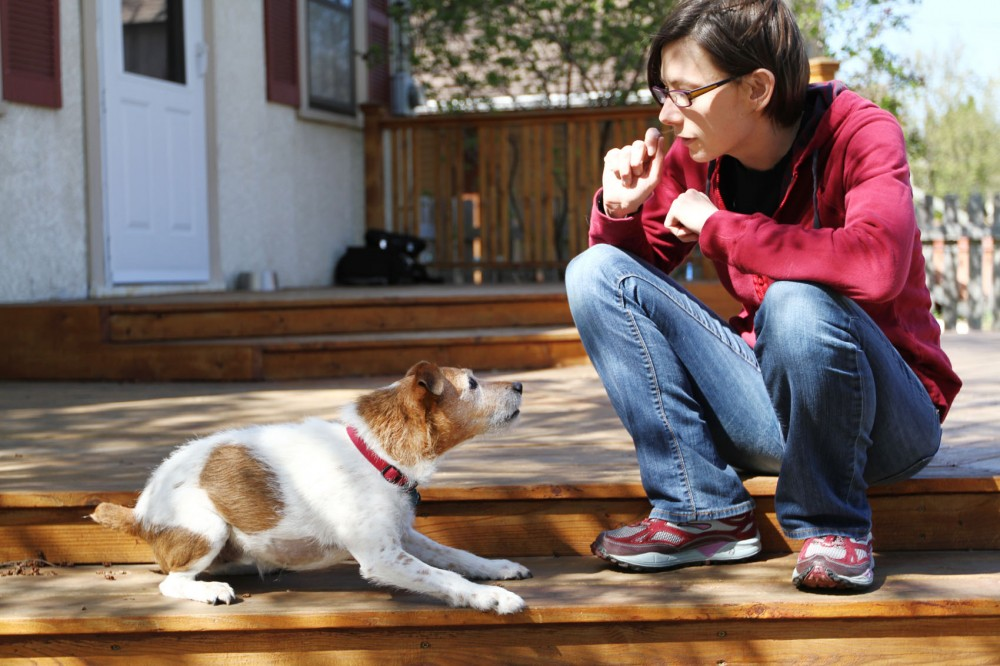 J.D., a 12-year-old Jack Russell terrier, waits for a treat from his owner, third-year graduate veterinary student Elizabeth Prescott, Tuesday in Prescott's St. Paul backyard.
