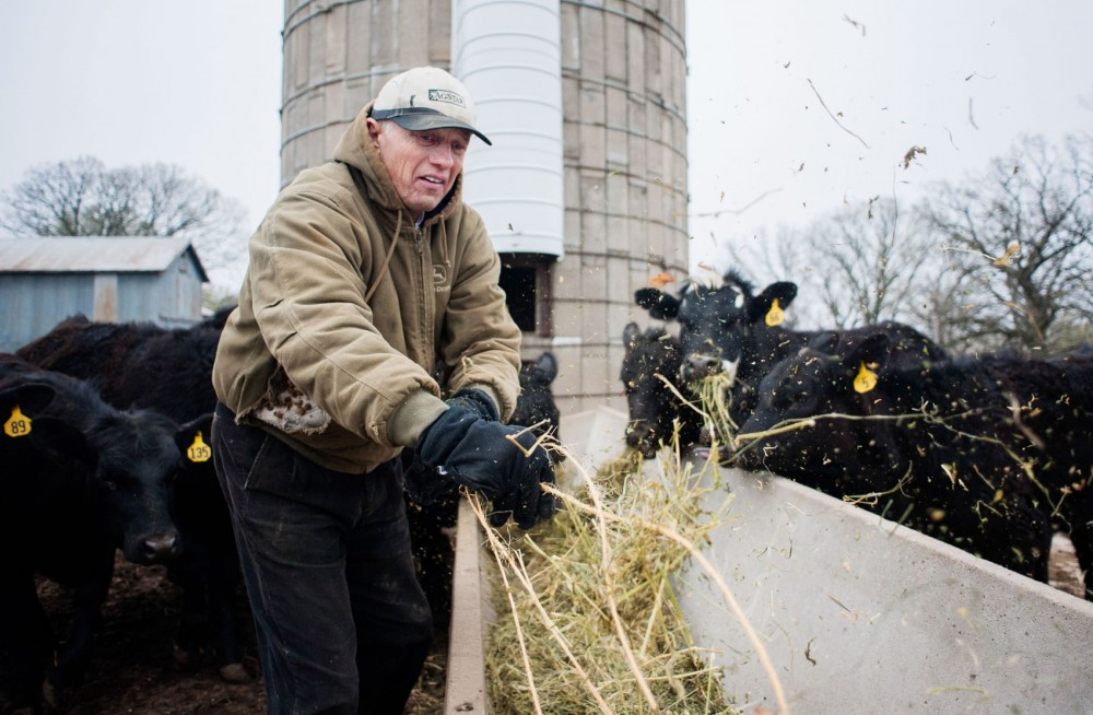 Steve Sviggum feeds hay to his cattle Saturday morning at a farm near his home in Kenyon, Minn.  In addition to working as communications director for the Minnesota Senate Republican Caucus, Sviggum grows corn and raises cattle with his two brothers.