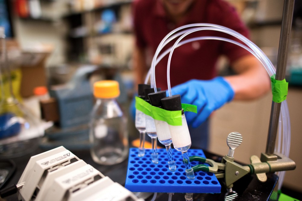 Bacteria react to degredate Atrazine at professor Larry Wackett's lab in Gortner Laboratory on Monday. Originally developed for Atrazine, the bacteria-filled beads are now being used to clean fracking wastewater.