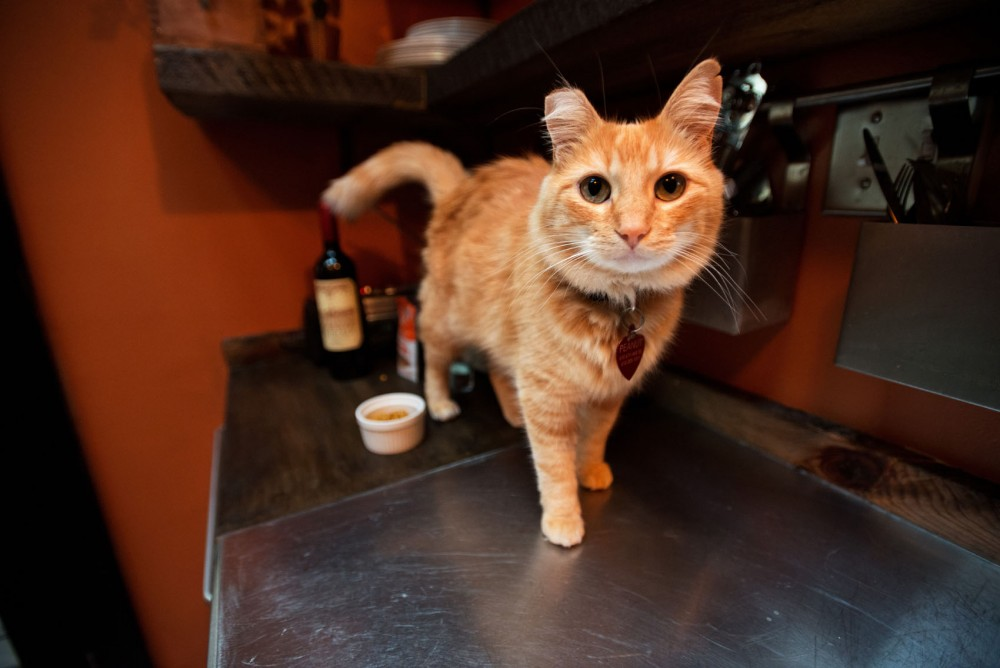Peanut the cat struts across the kitchen counter in his owner Jeremy Bay's home in Minneapolis.