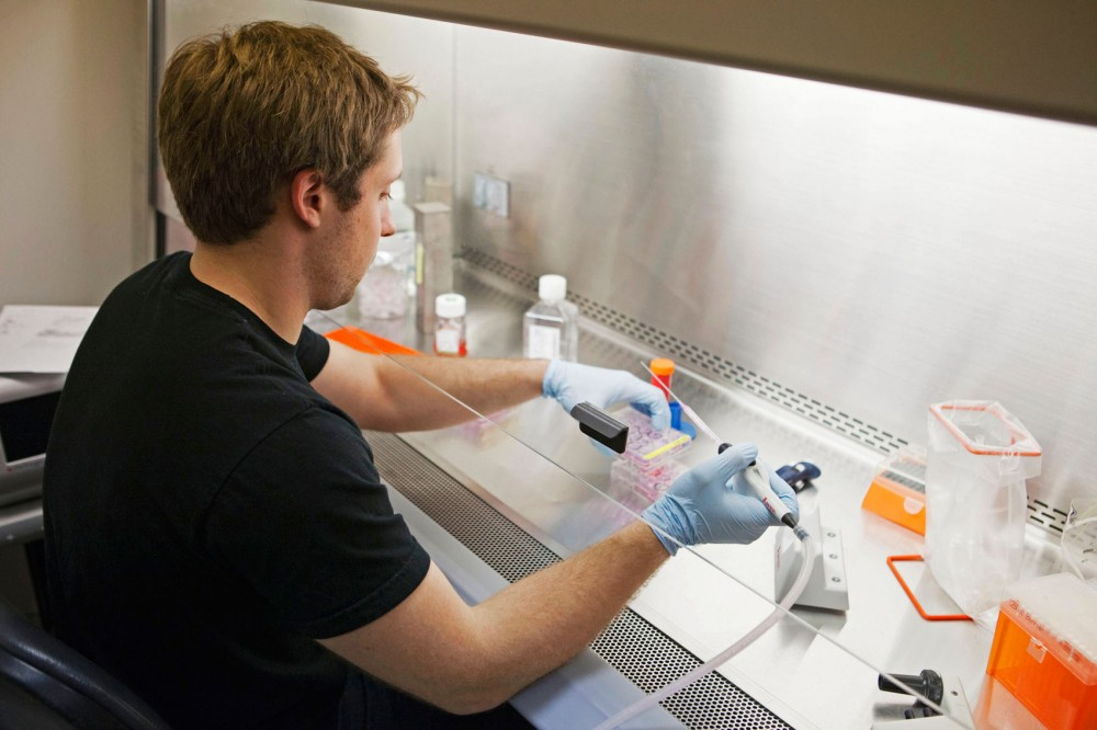 Lab technician, Dennis Webster, continues research at Recombinetics lab in Minneapolis. Recombinetics in currently moving research to pigs for studies in cancer.