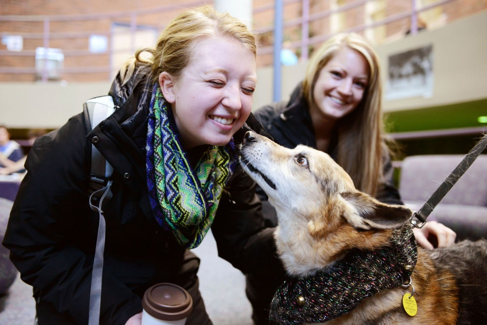 Speech-language-hearing sciences sophomore Haley Webb gets a kiss from Samson, a Corgi-German shepherd mix therapy dog, Monday at the Learning and Environmental Sciences building in St. Paul.