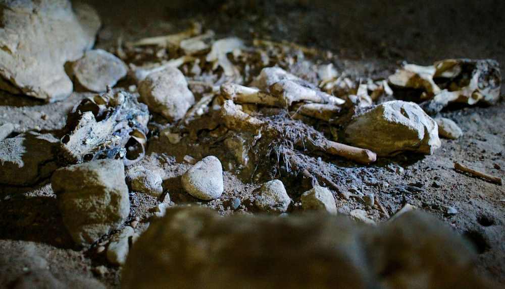 The skeletal remains of a raccoon lay on the floor of Miles Cave on Monday, Feb. 4, 2013, beneath Hastings, Minn. Raccoons and other cave-dwelling animals contribute to elevated levels of nitrates, through both their droppings and decomposing bodies.