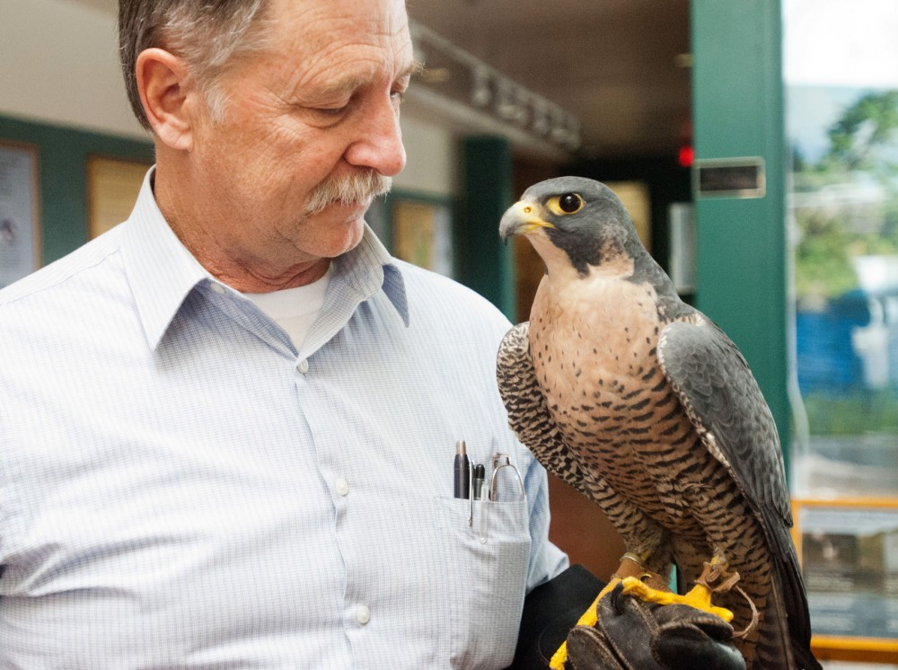Raptor Center founder and former director Pat Redig holds a peregrine falcon named Artemis on Monday, Nov. 26, 2012, in St. Paul.