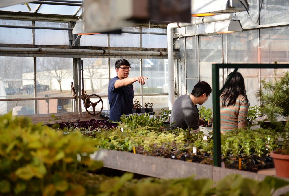 Biology senior Jamie Navarro shows students where to move their plants before they begin cleaning roots of soy beans at the greenhouses on St. Paul Campus.