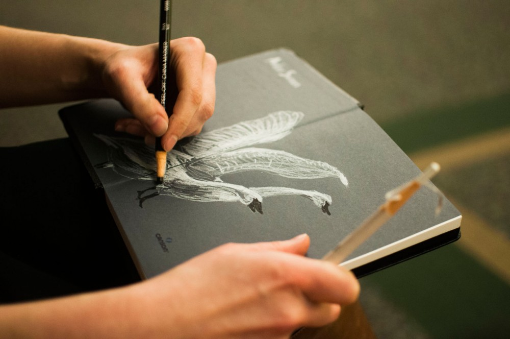 Thesis candidate Amber Sausen sketches swans at the Bell Museum of Natural History.