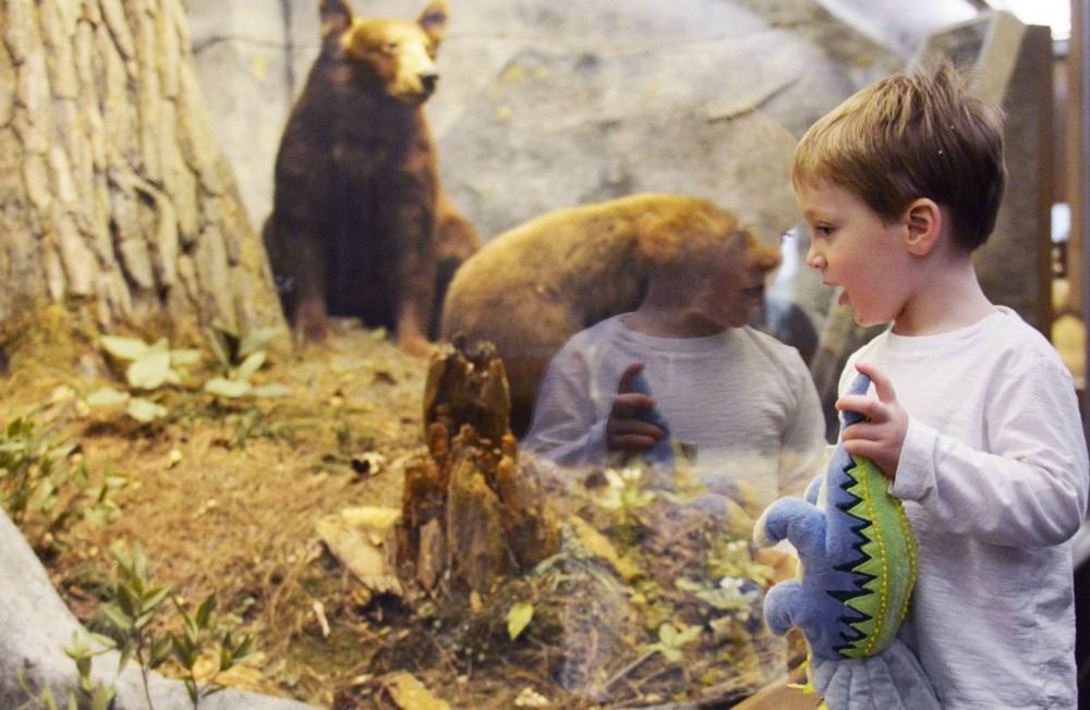 Three-year-old Baxter Fiscus looks at the bear exhibit at the Bell Museum of Natural History as he tours with his mom Lynne and brother Braxton on Wednesday, April 17, 2013.