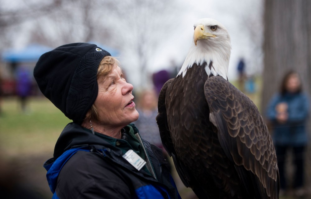 Educational volunteer Claire Palmer educates visitors about Maxime, an adult bald eagle, during the raptor release in Bloomingtons Hyland Lake Park Reserve on Saturday, May 4, 2013.
