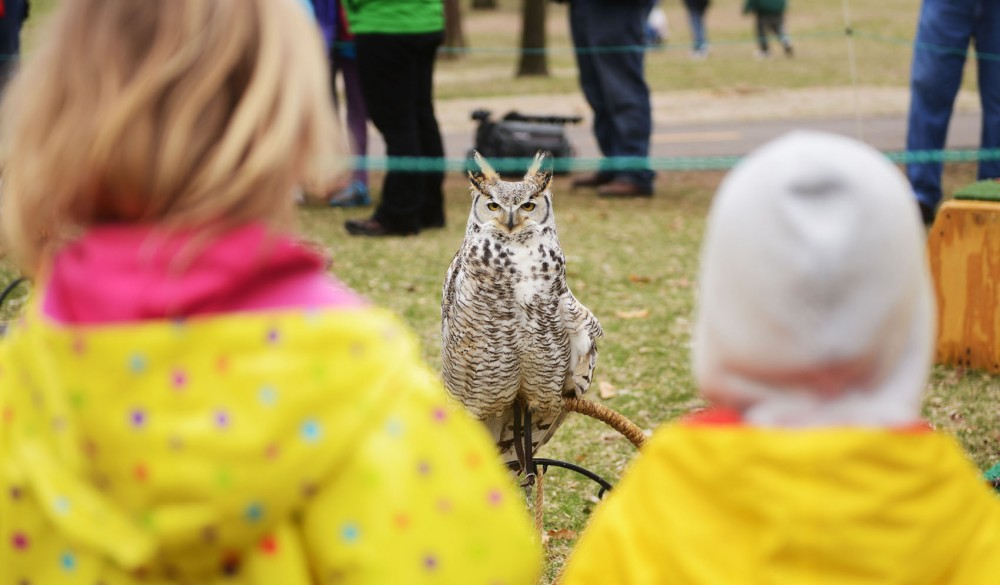 Visitors watch a great horned owl during the raptor release event in Bloomingtons Hyland Lake Park Reserve on Saturday, May 4, 2013.