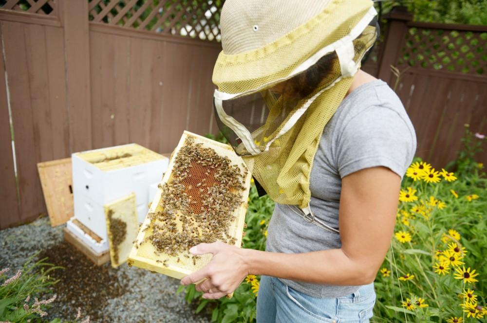 Bee Squad coordinator Becky Masterman checks on bees in a hive located in the Kenwood neighborhood of Minneapolis on Sunday. Masterman said that increased amount of dead bees is a recent issue, specifically in the Kenwood neighborhood.