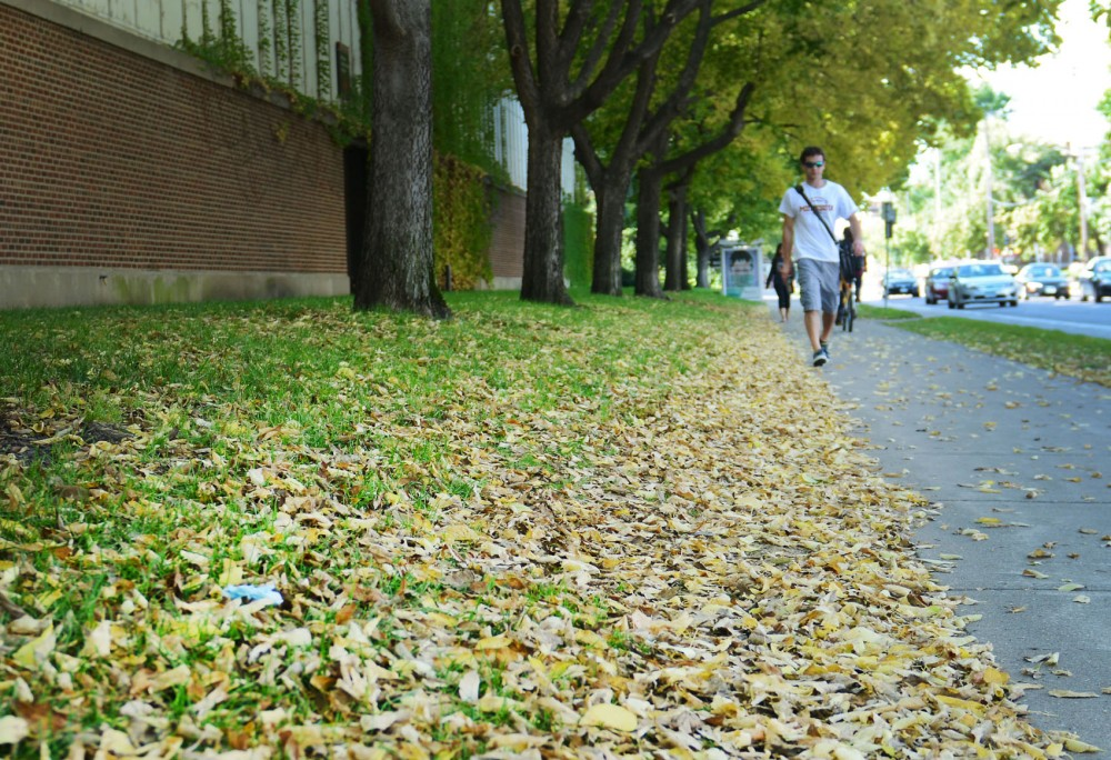 University of Minnesota researchers discovered that leaf litter can be a source of pollution for urban lakes and rivers, and reducing leaf litter can improve water quality. University Landcare workers will begin removing leaves in the next few weeks.
