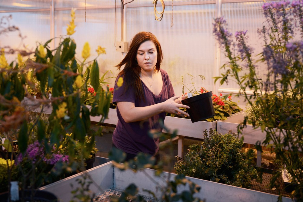Junior Biology major Laura Billstein works as a lab assistant moving plants to prepare for a botany class in Plant Growth Facilities on St. Paul campus, Friday.