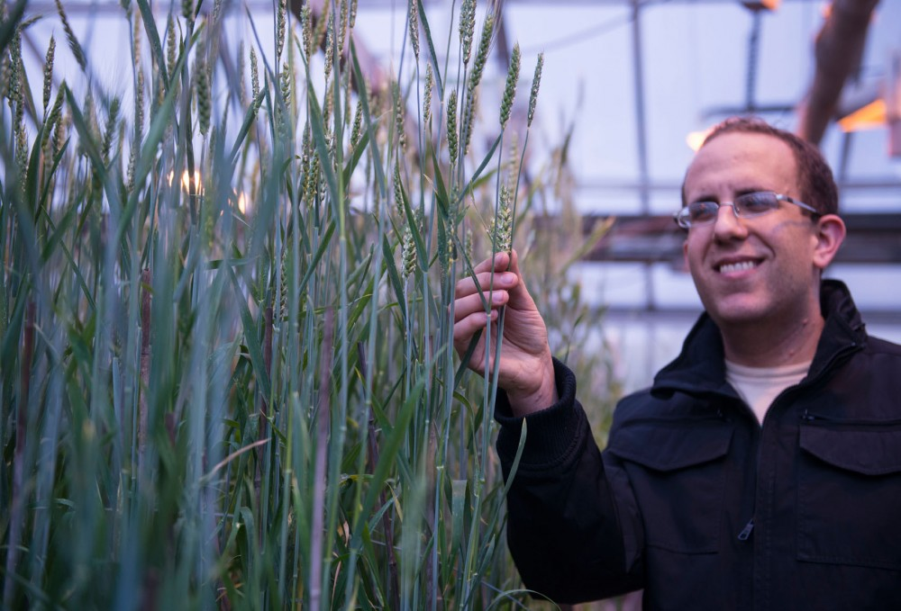 Third year Plant Pathology graduate student Matthew Haas presents wheat growing in the Plant Growth Facility on Monday.