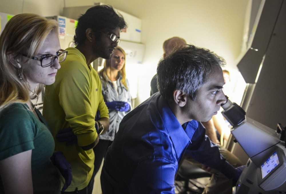 Assistant professor and lead researcher Anindya Bagchi views slides through a fluorescent microscope as other researchers gather around in Bagchi's lab Thursday in ___.