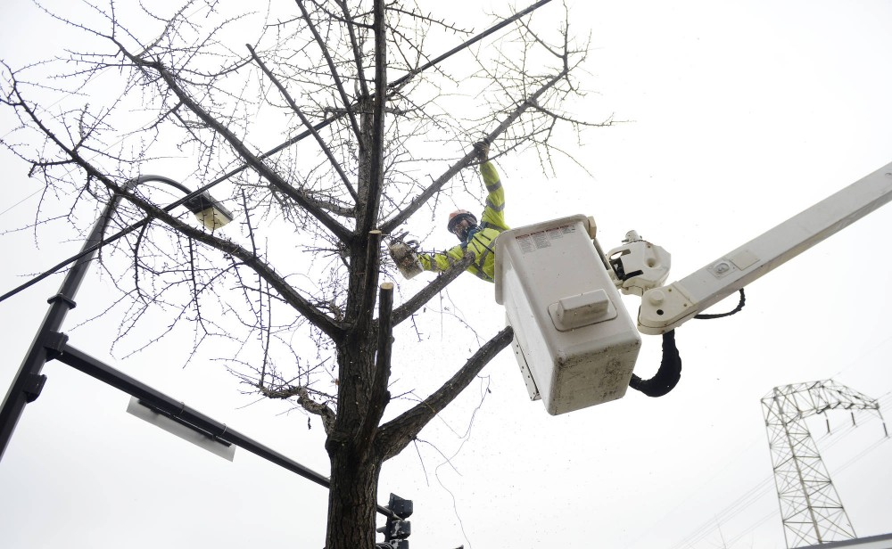 Keith Peterson cuts branches from a Dinkytown tree on Wednesday. The city is cutting down more than 30 of the nieghborhoods trees that have died from high salt concentrations in the soil and a lack of watering.