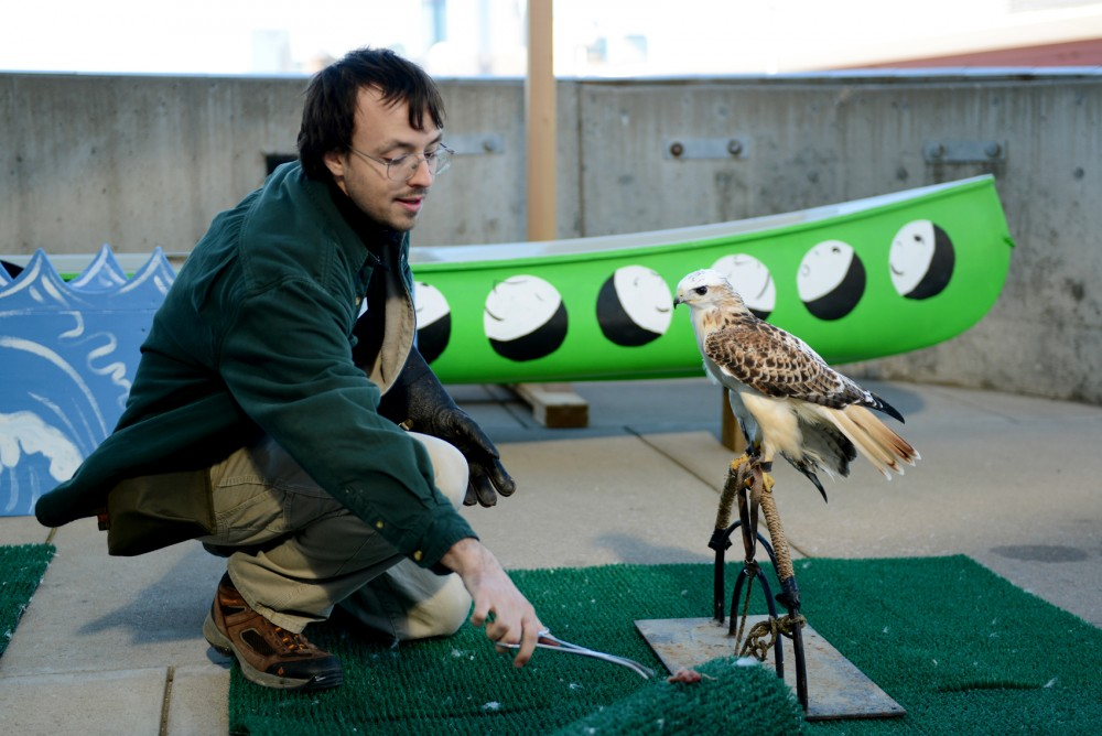 Dan Hnilicka of the University of Minnesotas Raptor Center gives a treat to Casper the Red-tailed Hawk outside of the Weisman Art Museum on Tuesday. Raptor Center staff answered questions about birds and allowed students to observe and take photos as a part of the University of Minnesotas Nature Heals: 30x30 program.