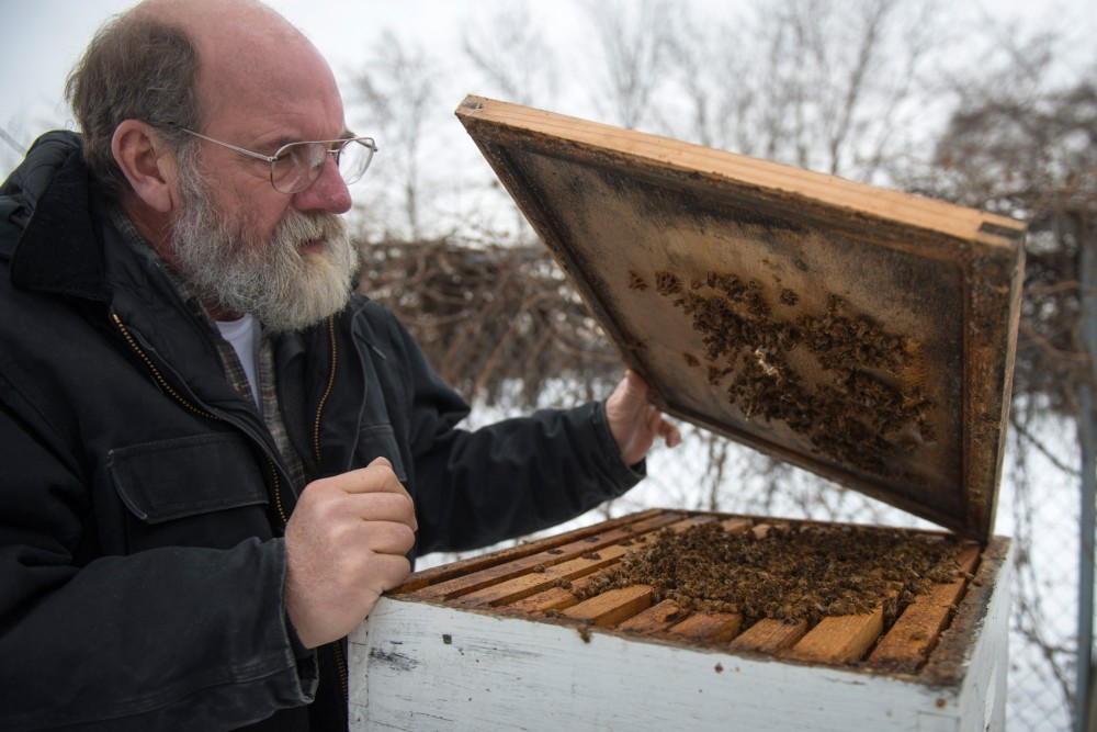 Gary Reuter of the University of Minnesotas Bee Lab looks inside of a box where bees are kept on the St. Paul Campus on Tuesday. Recent research shows that common pesticides found on plants and trees that bees feed off of are entering their nectar and harming bee populations.