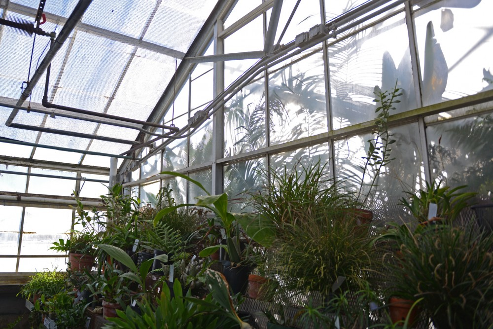 Plants grow within the CBS Conservatory on Tuesday. Located on the St. Paul Campus, the greenhouses contain plants from all across the globe.