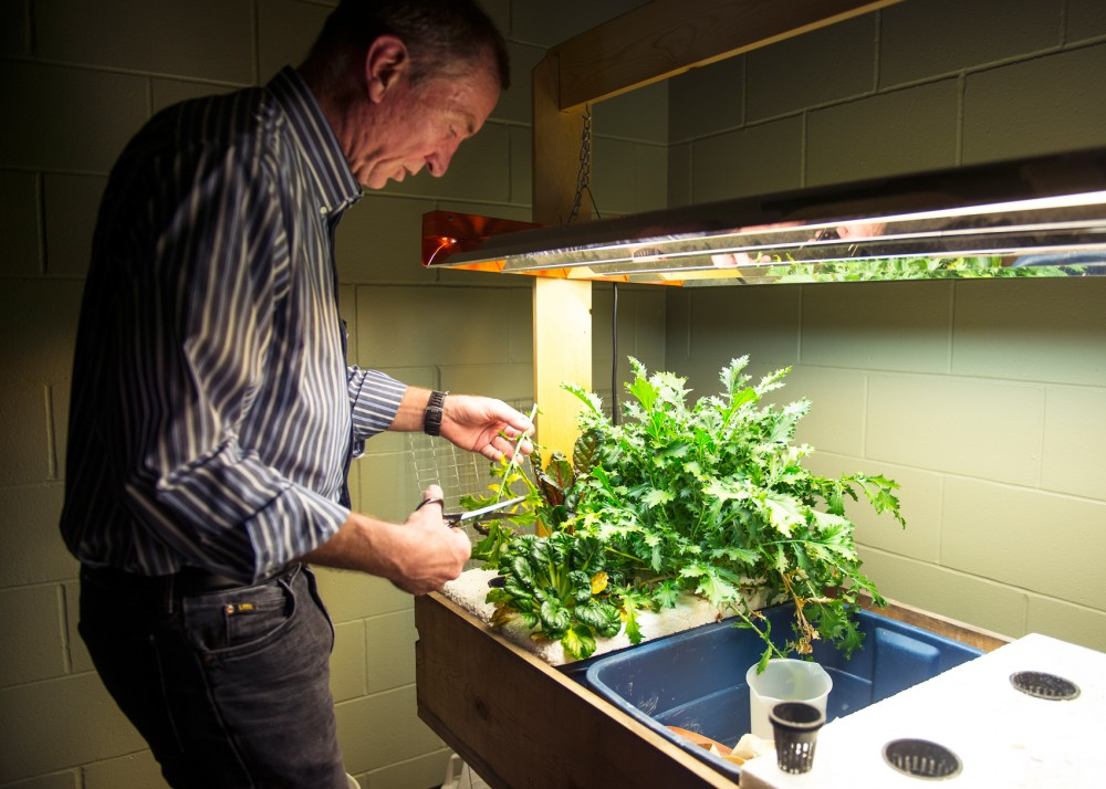 Horticultural professor Tom Michaels trims salad greens on his hydroponic salad table in Alderman Hall on Monday. The table is an example of an easy way that people can grow plants without having access to a full garden space.