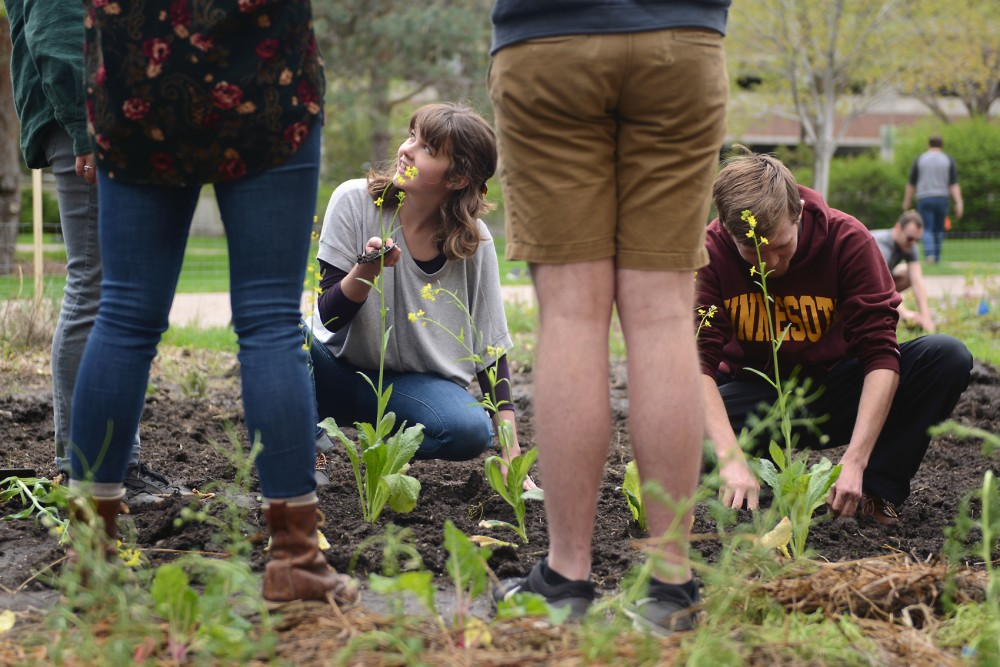 Students plant in the West Bank Community Garden during their Garden Festival event on Saturday. New research suggests increased exposure to nature through projects like community gardens can foster positive mental health.