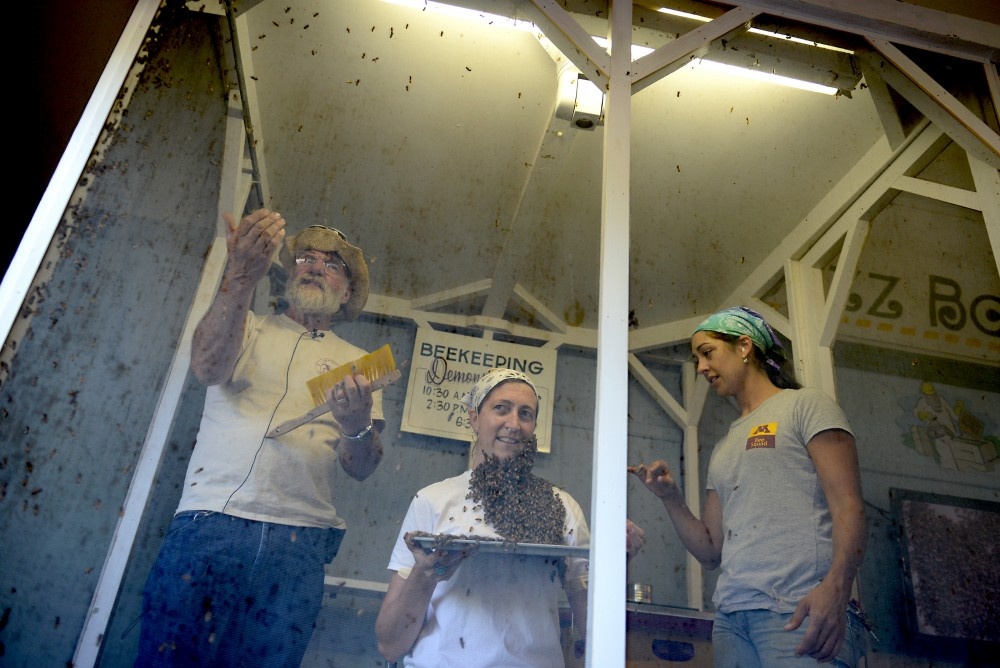 "University of Minnesota Bee Lab apicultural technician Gary Reuter, Bee Squad Team Leader Jenny Warner, and Bee Squad Education Program Associate Ana Heck demonstrate how to create a bee ""beard"" on Wednesday Aug. 31 at the Agriculture Horticulture Building at the Minnesota State Fair. On Aug. 25, Governor Mark Dayton issued an executive order to limit the use of pesticides that are harmful to bees and other pollinating insects in Minnesota."