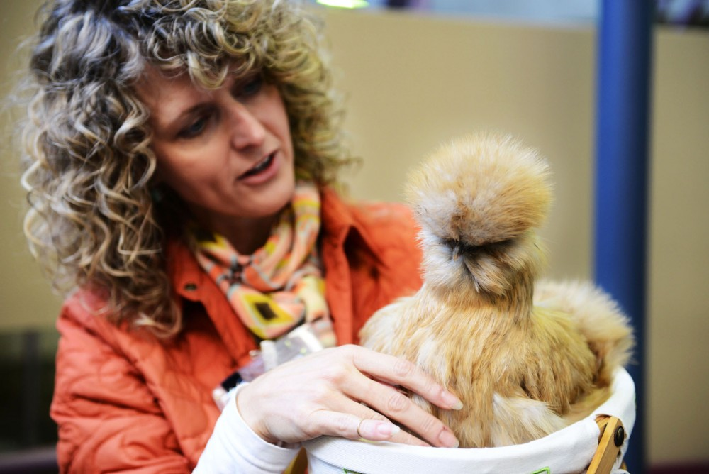 Tanya Bailey from the Animal-Assisted Interaction Programs holds Woodstock, a therapy chicken, Monday, Dec. 9, 2012 at the Learning and Environmental Sciences building in St. Paul. Woodstock, one of the founding members of PAWS, passed away earlier this month.