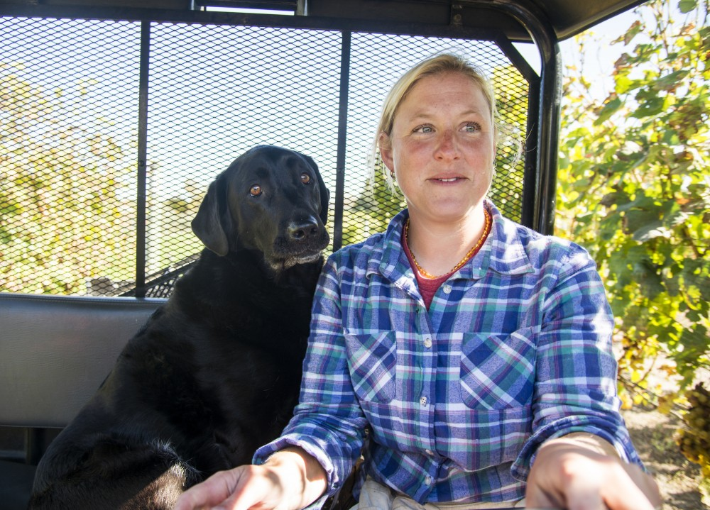 Jenny Thull, and her dog Lucky drive through the vineyard in Excelsior, Oct. 1. The Thulls bring their dog to work on a regular basis.