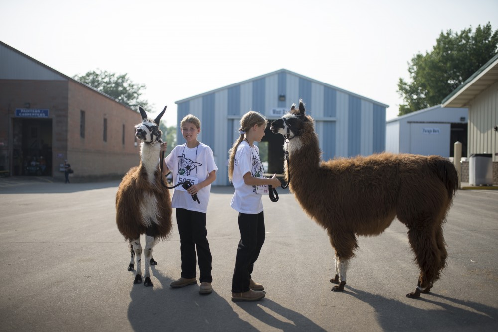 Identical twins Amanda and Ashley Overgaauw pose with their llamas before competing at the Minnesota State Fair on Thursday, Aug. 31 at part of