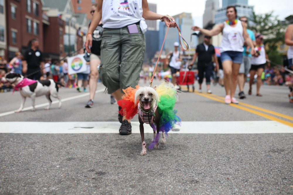 Marchers dressed their dogs in pride gear during the 2018 Twin Cities Pride parade on Sunday, June 24.