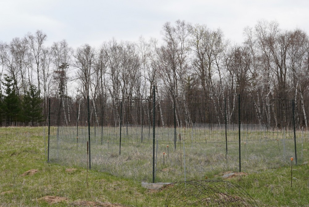 Elizabeth Borer's ecological research plots are nested against the forest line on a protected portion of research facility land on Friday, May 3.
