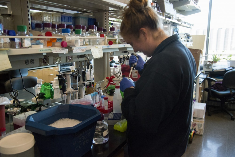 Maggie Brown, a St. Olaf graduate, pours RNAase into cell lysates on Sep. 3. She was hired as part of the grant that Harris Lab received for breast cancer research.