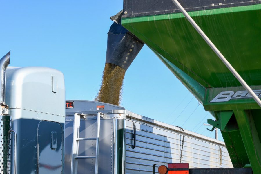 A combine unloads in Madison Lake on Wednesday, Sep. 30.