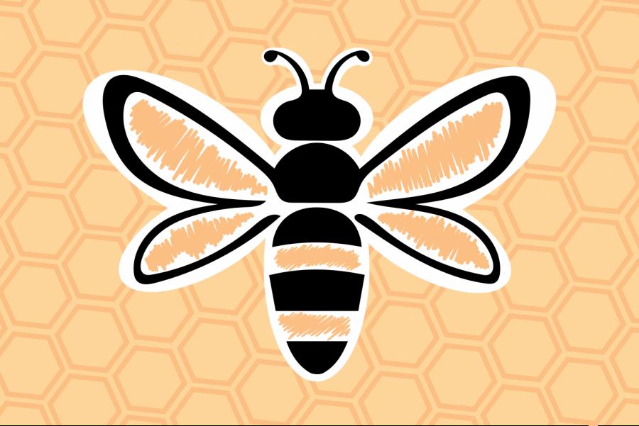 Cataloging Minnesota's native bees