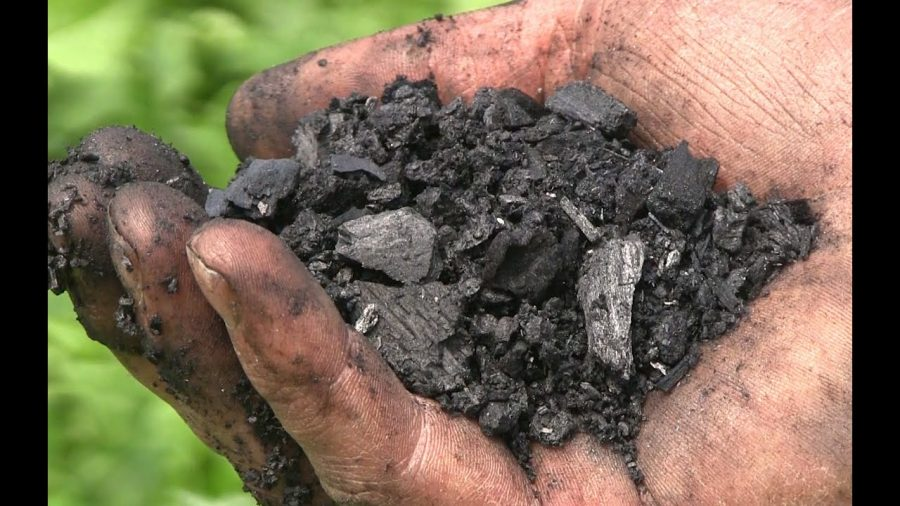 Biochar is an organic waste product that UMN researchers are looking to put around tree saplings to help them grow in response to the climate crisis.