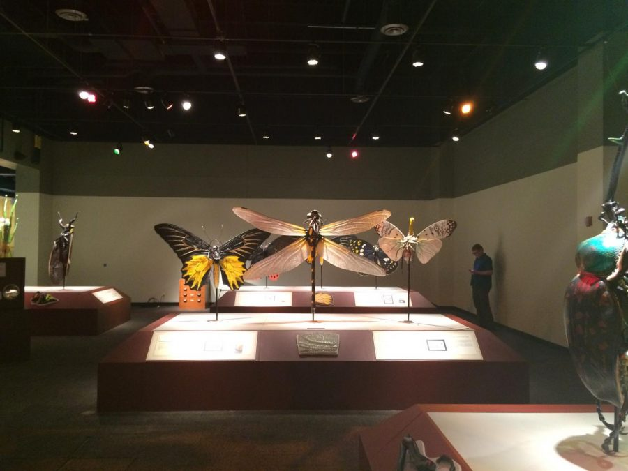 Bell+Museum+opens+larger-than-life+bug+exhibit
